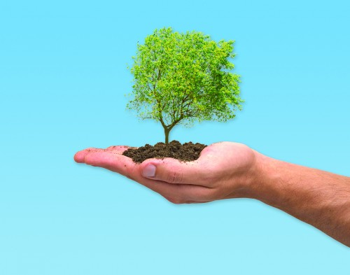Plant A Tree In Israel - Jewish National Fund